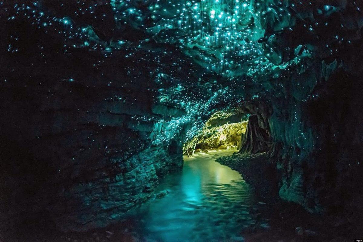 Por que a Nova Zelândia tem cavernas com tetos luminosos e brilhantes? 17