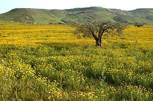 English: The Sicilian countryside near Caltagi...