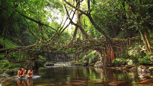 India's amazing living root bridges