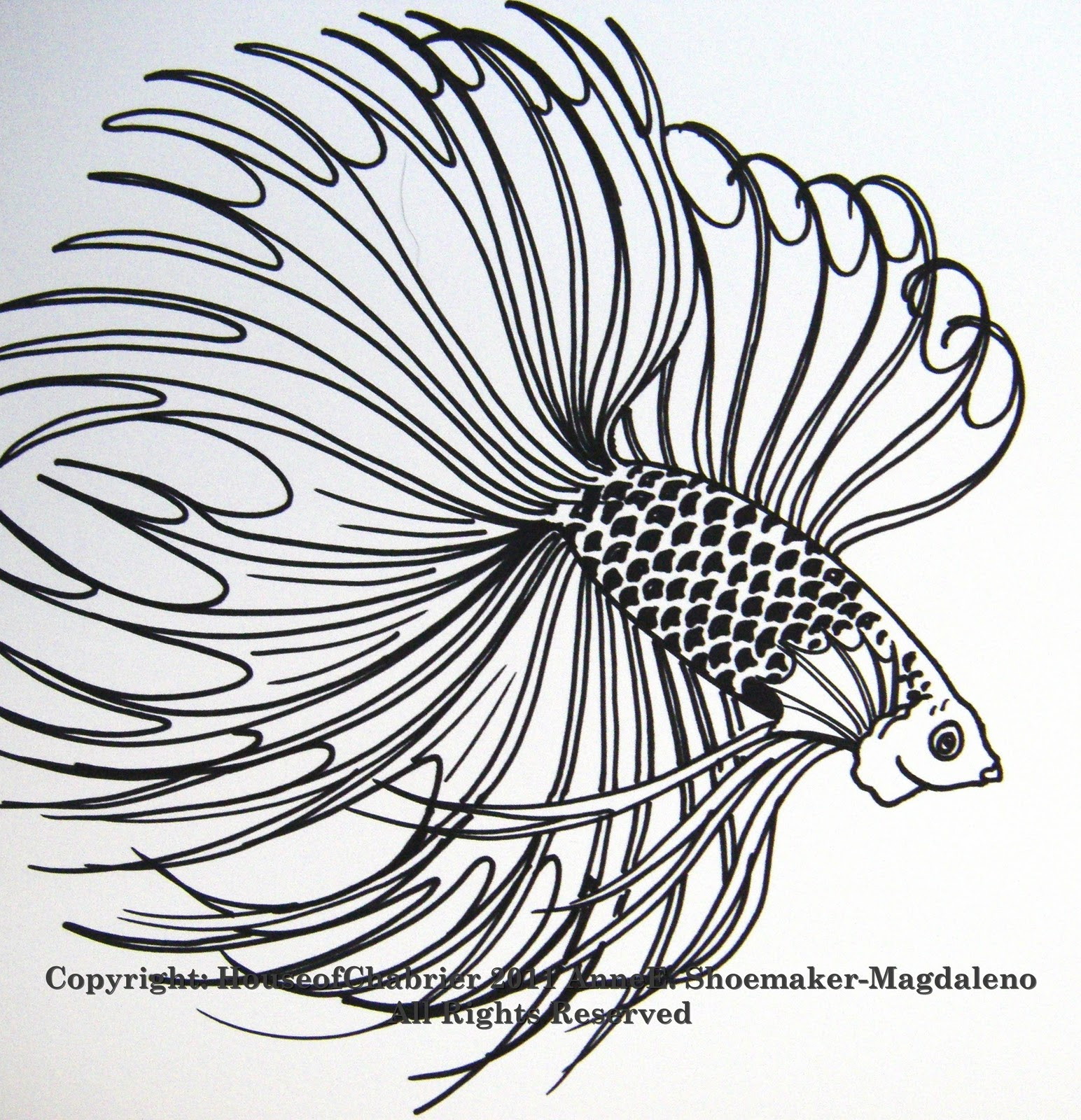Betta Fish Drawing | Free coloring pages - Clip Art Library