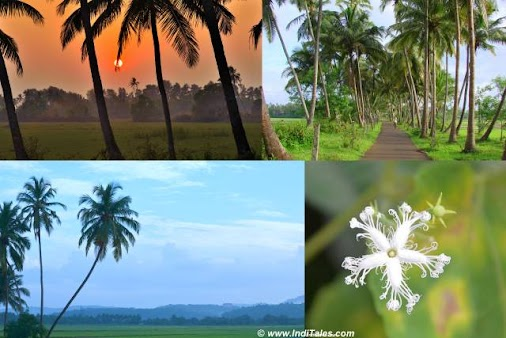 South Goa hinterlands landscapes scene - Places to visit in South Goa read more  #travel #travelblog...
