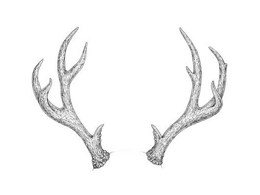 How to Draw Antlers Step by Step – New Tutorial on Envato Tuts+