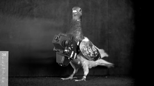 The Turn-of-the-Century Pigeons That Photographed Earth from Above | The New Yorker