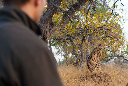How a Wildlife Walking Safari Can Change Your Life - Travel For Wildlife