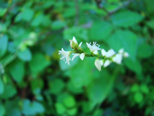 tiny sweet flowers2