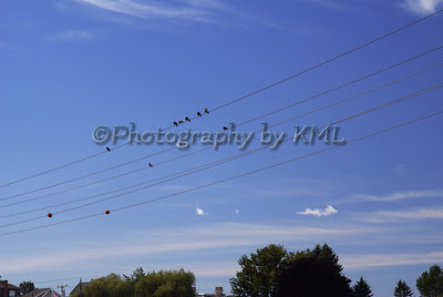 birds sitting on a power wire