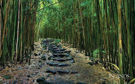 foto foto hutan tropis lebat  indah
