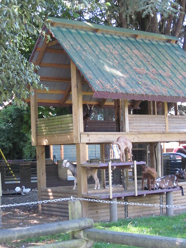 I thought it was a cool play structure, but it was full of goats!