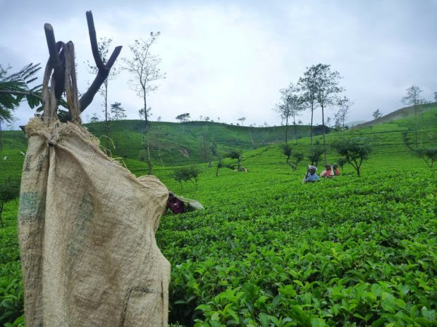 Amazing Destinations for Tea Lovers