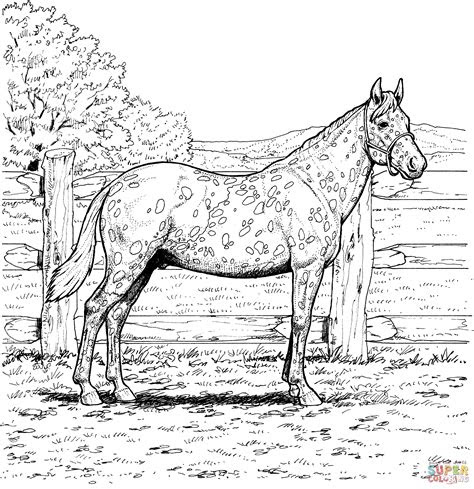 palomino horse coloring pages   print