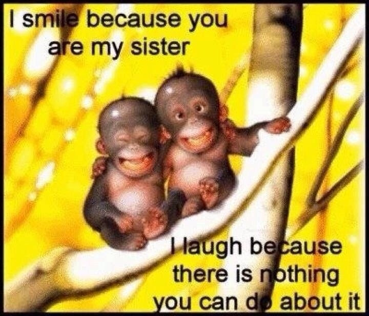 Funny Sister Quotes Sayings Funny Sister Picture Quotes