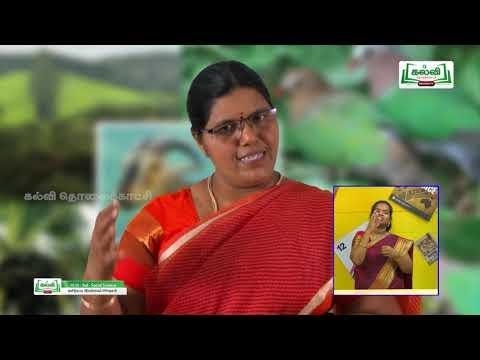 10th Social science தமிழ்நாடு இயற்கைப்பிரிவுகள்  அலகு 6 பகுதி 2 Kalvi TV