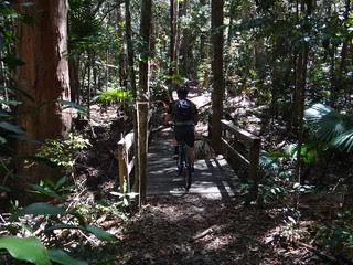 Rainforest - Kin Kin Creek