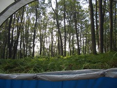 Morning from the Tent at the Rte 30 Shelter Area