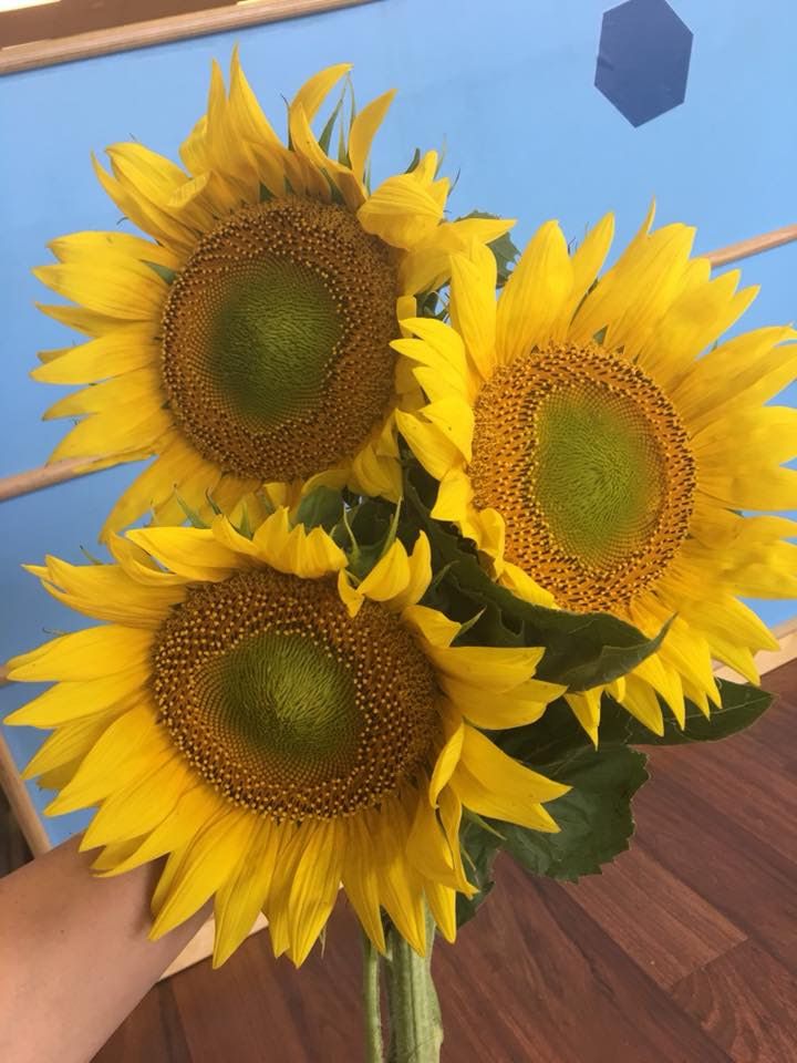 We received these beautiful sunflowers from one of our ...