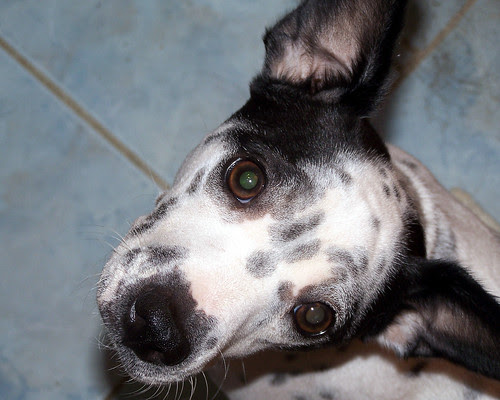 Dottie_closeup61507