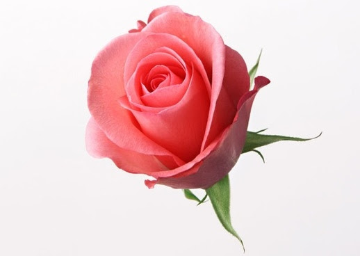 Beautiful Flowers Pictures Download Sinhala21 Blogspot Com