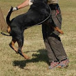 How to Trick Train your Rottweiler October 30, 2015 superadmin 1 ...