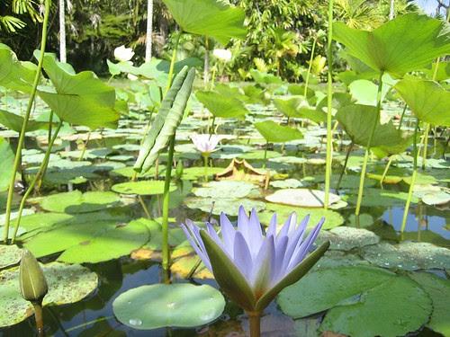 pond Mauritius