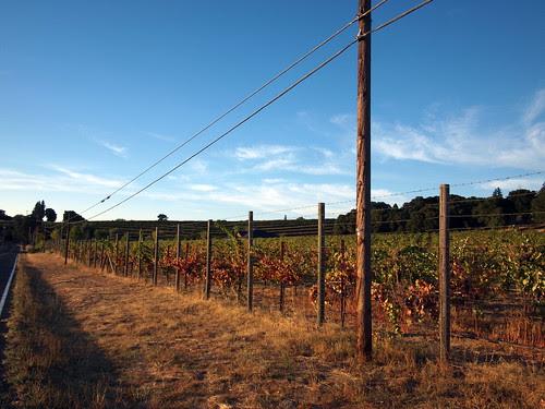 Vineyard on Old River Road