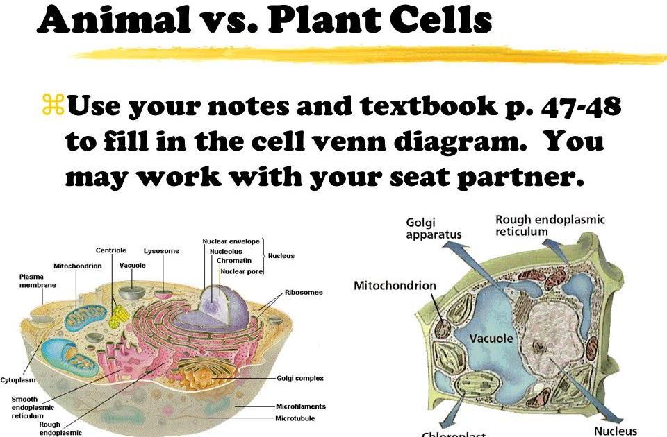 Animal Vs Plant Cell Venn Diagram - Hanenhuusholli
