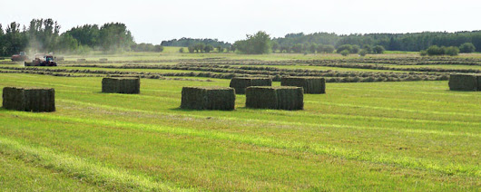 Canadian Hay Forage Grain Producers - Exporters of Hay and Canadian Grain Internationally