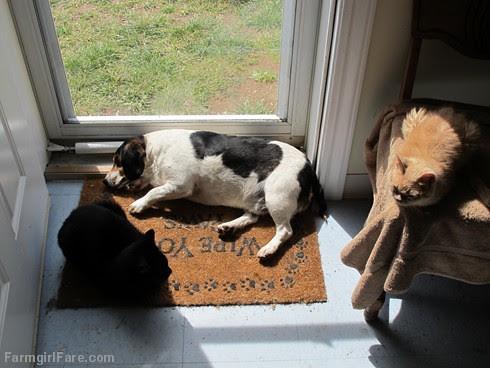 Bert and cats (4) - FarmgirlFare.com