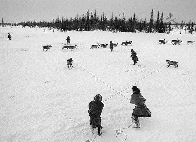 Salgado: The Nenets are the true cowboys of Siberia