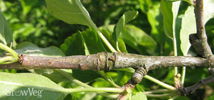pruning2 1x