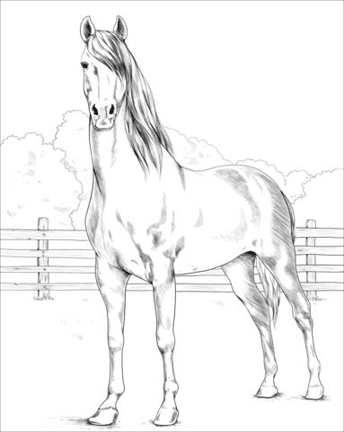 pferde ausmalbilder kostenlos - vorlagen zum ausmalen gratis ausdrucken