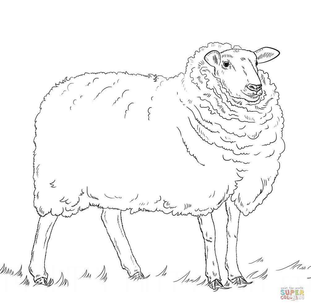 Disegni Di Pecore Da Colorare Pagine Da Colorare Stampabili