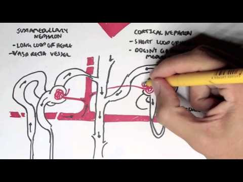 Renal Physiology You Tube Videos