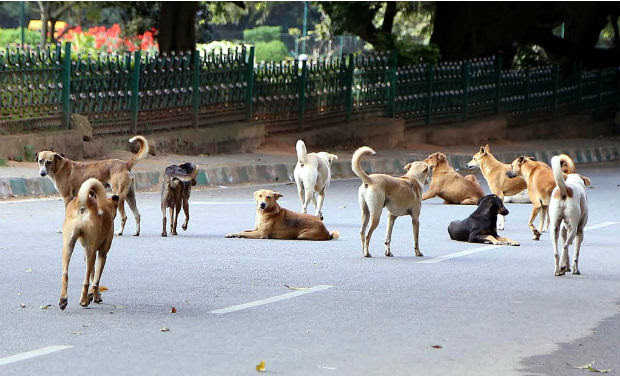 stray dogs in cubbon park_0_0_0_0