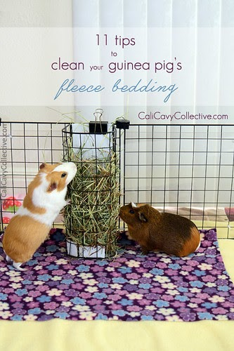 Spotless Fleece Bedding For Your Guinea Pig, How Much Is Bedding For A Guinea Pig