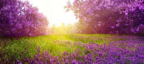 Romantic Lavender Background Banner, Romantic, Lavender