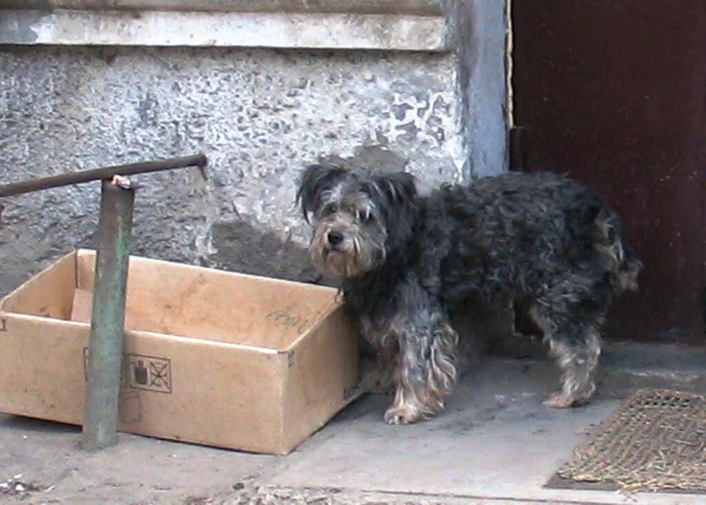 http://upload.wikimedia.org/wikipedia/commons/thumb/b/b6/Dog_%28Dimitrova_Street%29.jpg/1024px-Dog_%28Dimitrova_Street%29.jpg