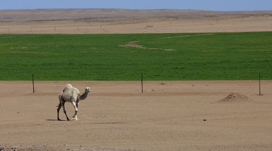 Saudi Arabia squandered its groundwater and agriculture collapsed. California, take note.