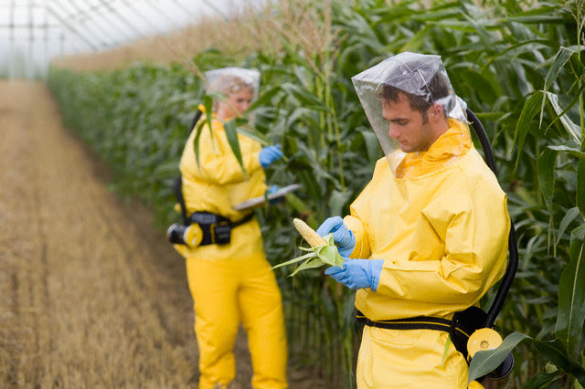 Sorry Monsanto, But GMO Crops Are Now Banned In 38 Countries & Only Grown In 28...