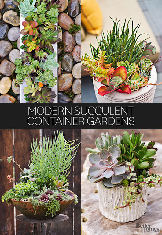 Modern Succulent Container Gardens