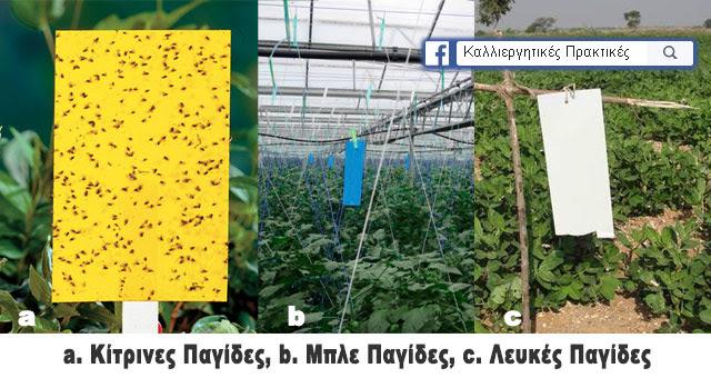 Παραδείγματα κολλητικλων παγίδων στο θερμοκήπιο και στους αγρούς - Κίτρινες, μπλες και λευκές κολλητικές παγίδες