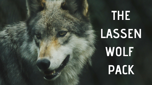 Meet the Lassen Wolf Pack | St. Bernard Lodge blog