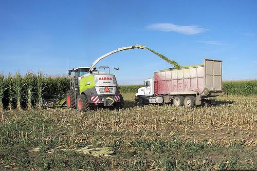 corn silage photo