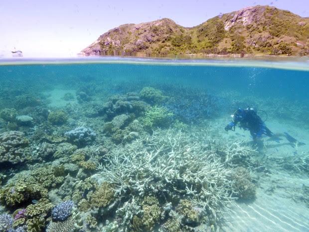 Grande Barreira de Coral começa a apresentar sinais de desbotamento (Foto: WWF AUSTRALIA / AFP)