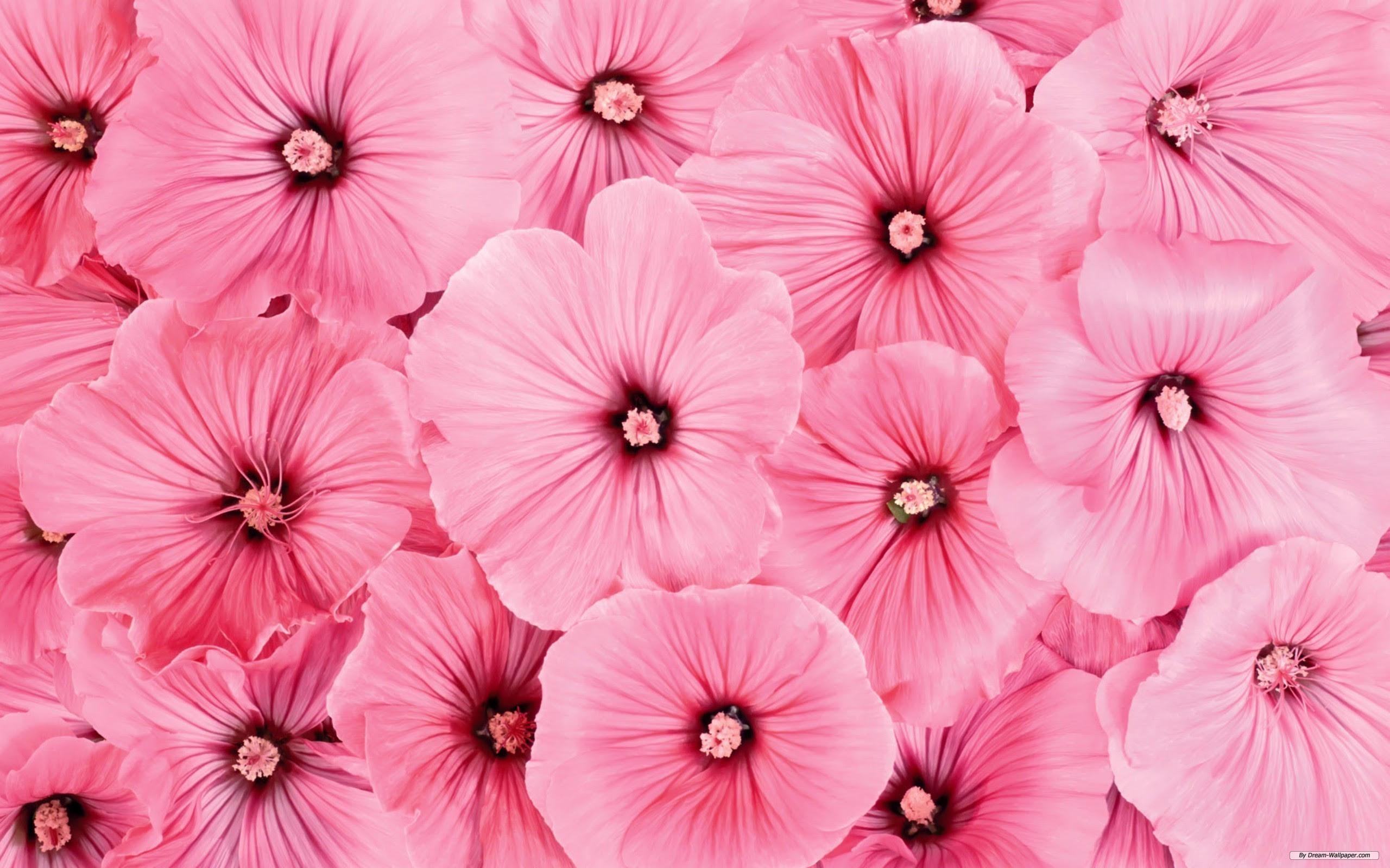 1000 Wallpaper Bunga Pink Hd HD Paling Baru