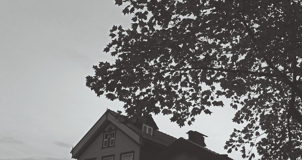 IMG_7769