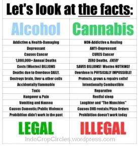 ganja cannabis vs alcohol alkohol