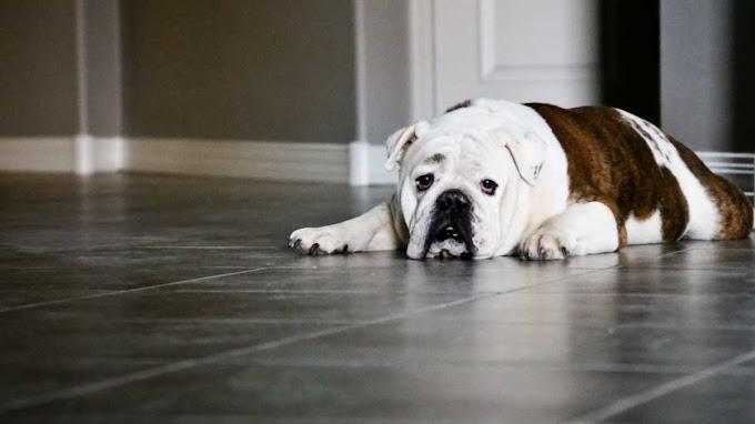 Cómo bañar al perro en casa en 10 pasos de forma sencilla