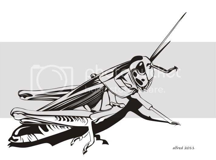 Line Art Download : Grasshoppers free download line art vector on