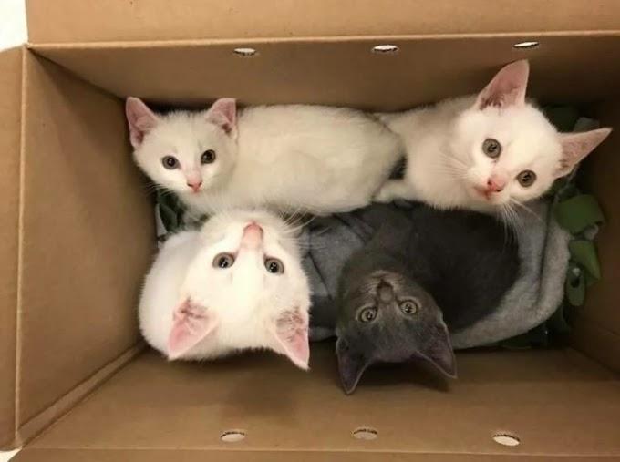 Fue a adoptar dos lindos gatitos, pero ellos se negaron a dejar a su otro hermano en el refugio