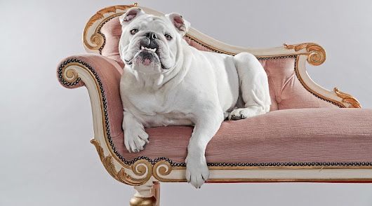 Why English Bulldogs Are Great Family Pets – Word Matters!